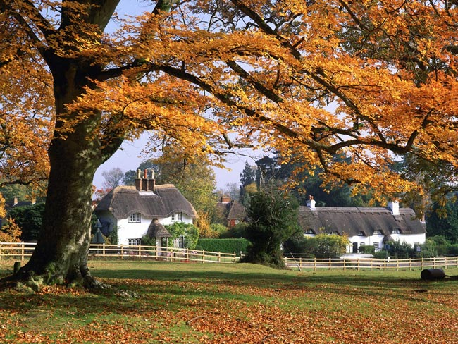 New Forest Hampshire - Pyesmead Farm
